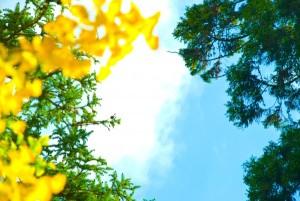 見上げた空の景色