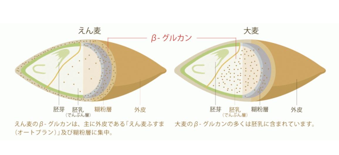 えん麦と大麦の違い