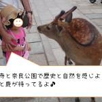 東大寺と奈良公園で歴史と自然を感じよう!大仏と鹿が待ってるよ♪