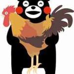 復活を遂げた「天草大王」って美味しい地鶏を知らないと損!熊本応援