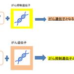 【がん最新情報】血液1滴でがんを早期発見!確率95%!判別法のマイクロRNAの違いとは?