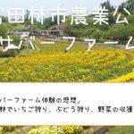 お薦め「サバーファーム体験の感想」大阪・富田林でいちご狩り、ぶどう狩り、野菜の収獲ができる!